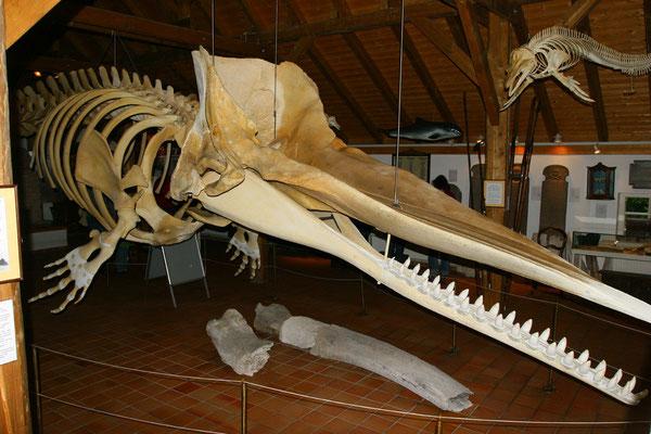 Die Walknochen erinnern an die frühere Tradition des Walfangs auf der Insel, zur Ausstellung gehört auch ein 15 m langes Pottwalskelett