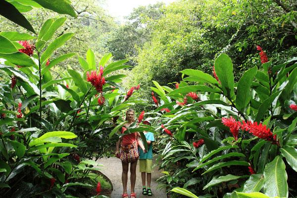 Der botanische Garten Jardin du Roi enthält die ganze Vielfalt der botanischen Raritäten und Schönheiten.