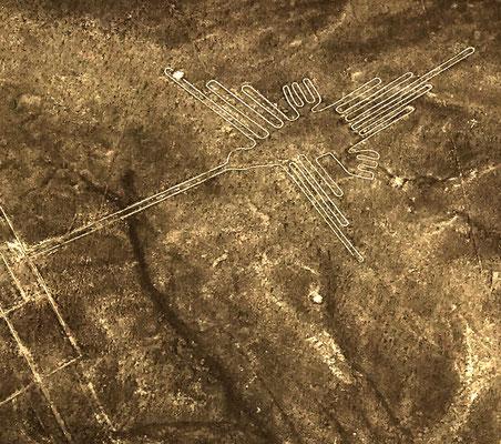 """oder """"Der Kolibri"""". Vor mehr als 2000 Jahren wurden diese Bilder in den Boden der peruanischen Wüste gescharrt."""
