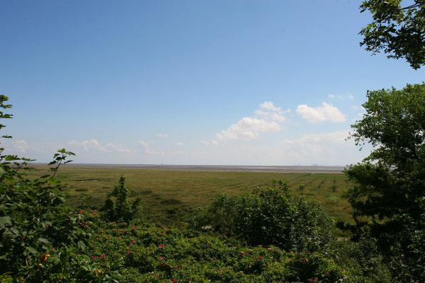 eine Fahrradtour nach Ostland ist Natur pur, über den Seedeich entlang am Weltnaturerbe der UNESCO