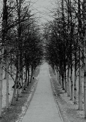 auf dem städtischen Friedhof