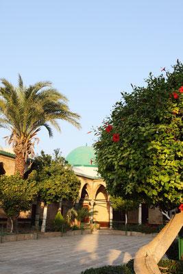 Der Hof der Moschee mit Palmen, Oliven- und Zitrusbäumen - ganz entzückend.