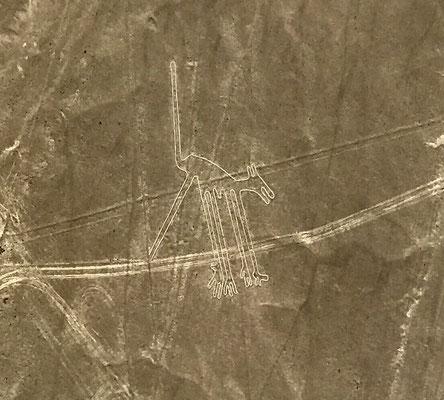 """""""Der Hund"""". Es gibt hunderte von Darstellungen, die zufällig 1927 von einem Piloten im Überflug entdeckt wurden."""
