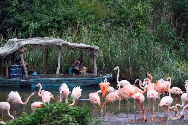 Abenteuerliche Bootsfahrt durch den Themenpark Sambesi