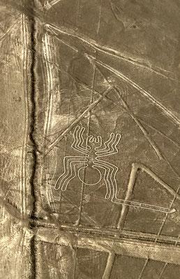 """""""Die Spinne"""". Bis heute haben sich diese phantasievollen Scharrbilder der Nazca erhalten, die von 200 v.Chr. bis 800 n. Chr. ihre Hochzeit hatten."""