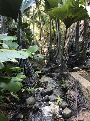 Vor ca. 65 Millionen Jahren entstanden müssen sich die Entdecker dieser Insel in die Zeit des Mesozoikums und der Dinosaurier zurückversetzt gefühlt haben.