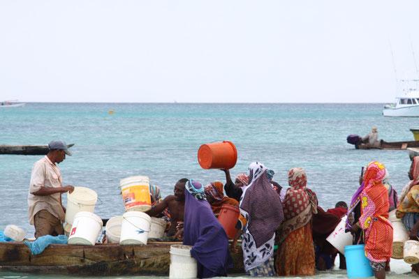 Oder sie warten darauf, was die Fischer als unbrauchbaren Beifang verteilen.