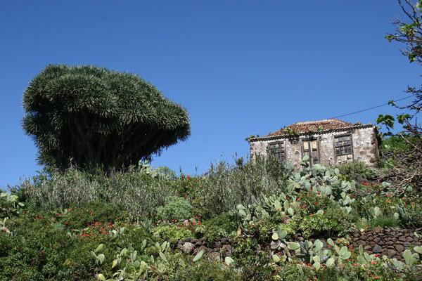"""La Palma - Die üppige Vegetation und die natürliche Schönheit der Insel führten zu den Beinamen isla bonita (""""die schöne Insel"""") und isla verde (""""die grüne Insel"""")."""