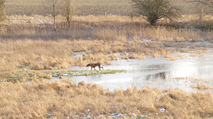19/51     Spaziergang in der Heide bei Schneeschmelze auf möglichst trockenem Grund