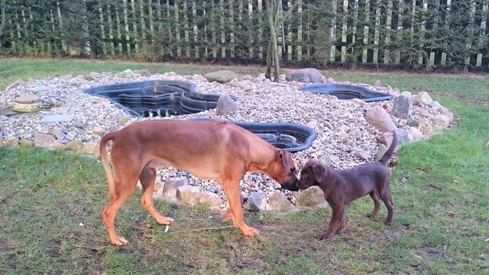 14/51     Immer wieder andere Hunde zu Besuch, hier - der noch kleine Emil