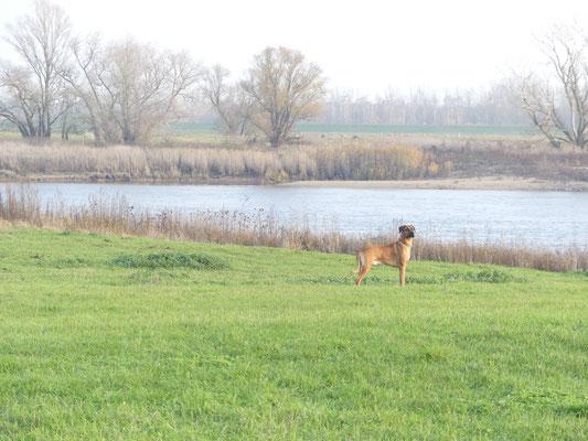 40/51     An der Elbe