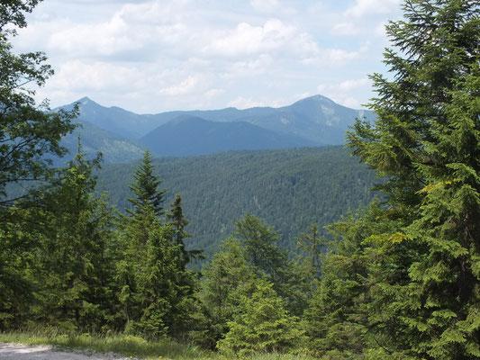 Ausblick vom Forstweg