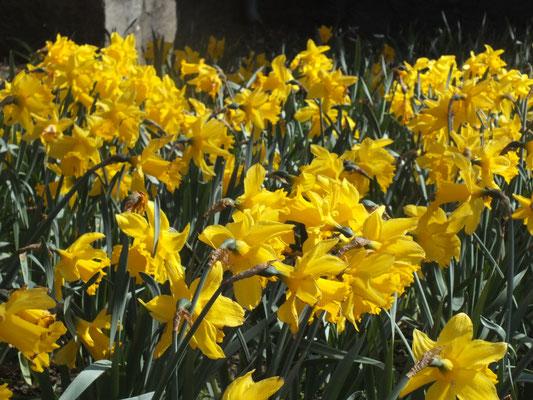 Blumenbeet bei der Stadtkirche (Westufer)