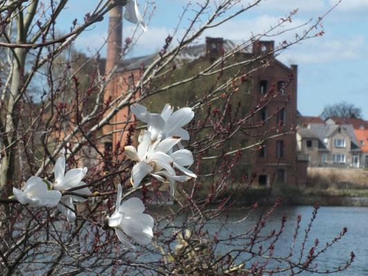 alte (leere) Fabrik am Wstufer