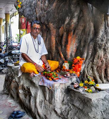 Mumbai  Gläubiger mit seinem heiligen Baum