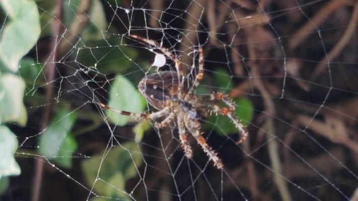 Nichts ahnend beobachteten die VPs eine fleissige Spinne