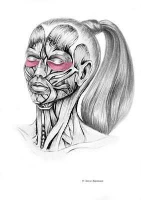 16. Reduzierung der Augenringe.     17. Beseitigung der Augenringe / Tränensäcke.