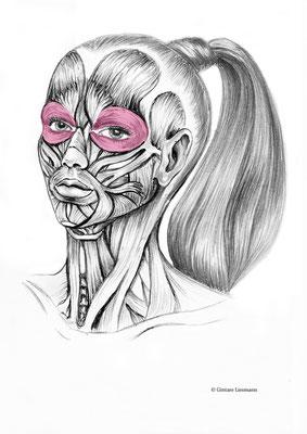 14. Kräftigung der Augenmuskulatur.