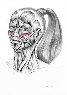 """21 . Glättung der Nasolabialfalten.      22.  Glätten der Falten im Gesicht mit dem Buchstaben """"O""""."""