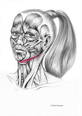 34. Stärkung der Unterkiefermuskulatur.    35. Vorbeugen des Doppelkinns.  36. Aufrechte Haltung