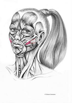 30. Kräftigung der Wangenmuskulatur.