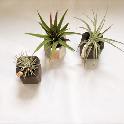 Mix it! Concrete Copper Air Plant Holder Set, custom combination