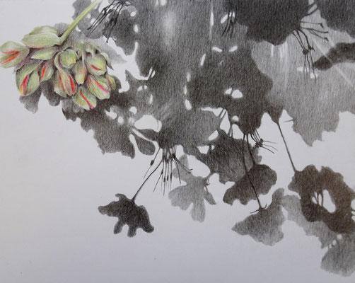 Schatten Pelargonie rot | 2020 | Bleistift / Farbstift auf Papier auf Holz / 20 x 25 cm