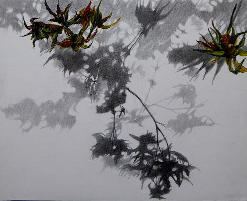 Schatten gelbe Blume II | 2018 | Bleistift / Tusche auf Papier auf Holz | 20 x 25 cm