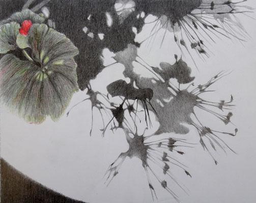 Schatten Pelargonie Blatt | 2020 | Bleistift / Farbstift auf Papier auf Holz | 20 x 25 cm