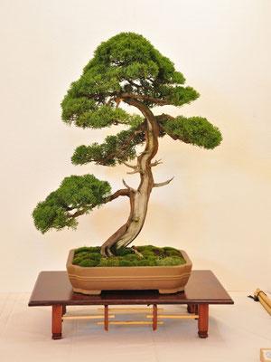 Juniperus chinensis di Franco Bergamini