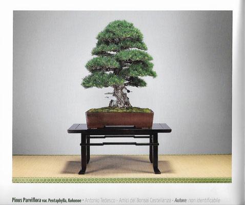 Il pino pentaphilla di Antonio Tedesco (catalogo UBI 2016)
