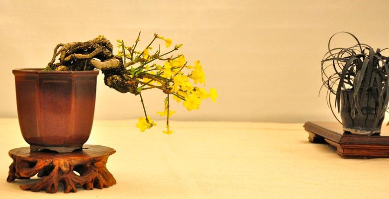 Jasminum nudiflorum di Beppe Giovanelli
