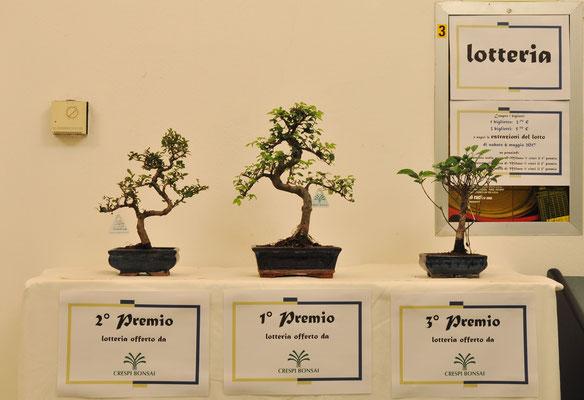 Premi lotteria offerti da Crespi Bonsai