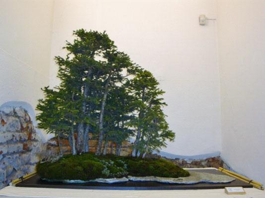 Boschetto di abeti rossi (autori Hideo Suzuki e Claudio Cermelli), Mostra AdB marzo 2011