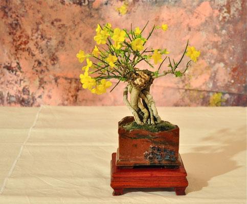 Jasminum nudiflorum di Gianpaolo Scoglio