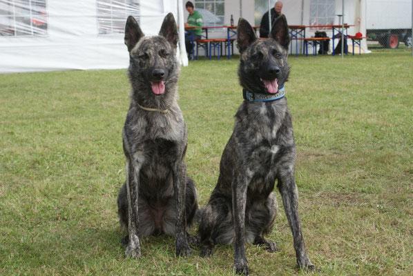 Alice und Arwen am 23.09.2012 bei den Bunten Hunde Wald!