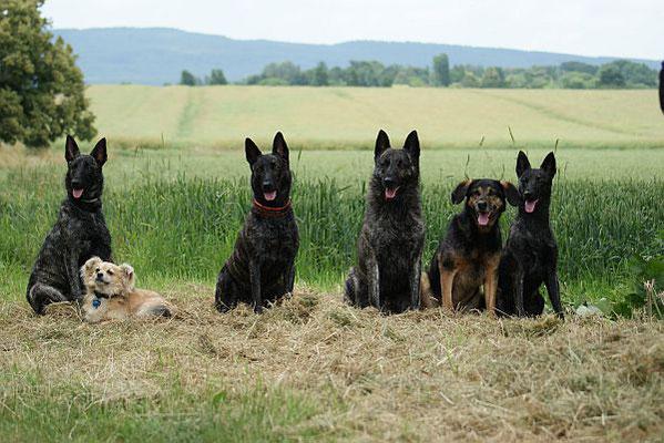 Enya,Bubbi,Darcy,Sky,Rocky&Fiby