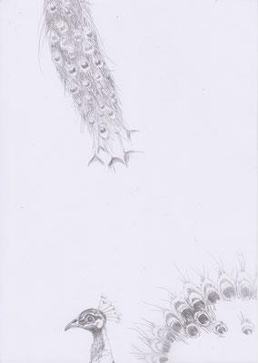 """Aus der Serie: """"Vorzugsausgabe"""",Zeichnungen mit Katalog, 29,7 x 21 cm sign. und nummeriert 1/11"""