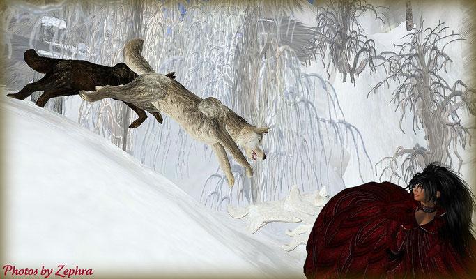 ...Pas vu le loup sur la Lance ...?