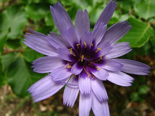 Ctamanche bleue