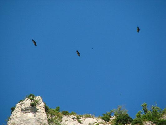 Vautours au dessus de St May