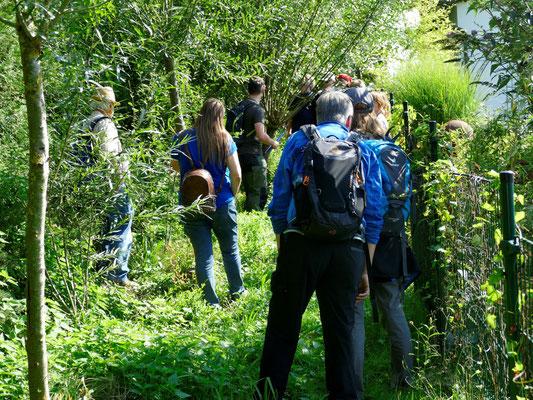 Hier wird die ökologische Bedeutung der Weiden erläutert.