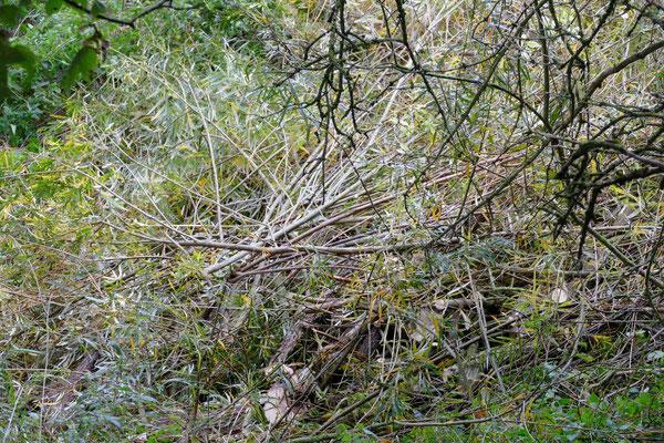 Die Äste der Weide liegen zum Abtransport bereit. Foto: Norbert Ephan