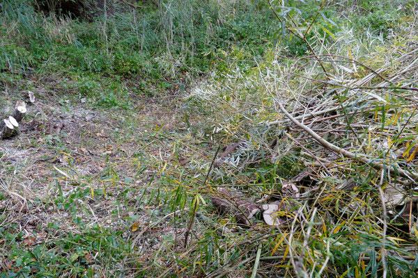 Nach dem Beseitigen einer Weide ist die Lage des ehemaligen Teichs zu erkennen. Foto Norbert Ephan