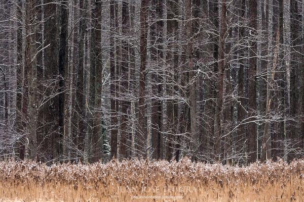 Fachada forestal.