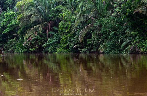 El hermoso río Caño Negro.