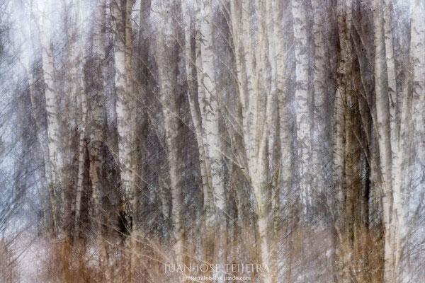 El bosque en abstracto.