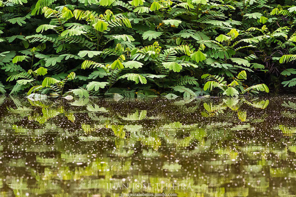 Refugio nacional de vida silvestre mixto Caño Negro.