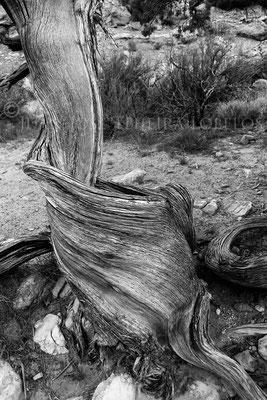 En Park Avenue Trail, Arches Rock National Park, Utah, EE.UU.