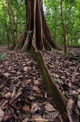 Parque nacional Corcovado.